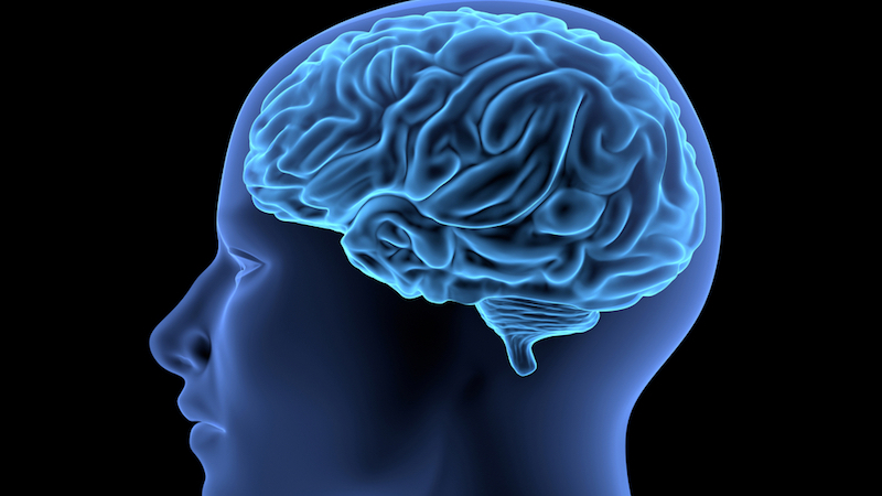 human brain to illustrate event, Neuroscience of a One-Track Mind